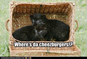 Where's da cheezburgers!?