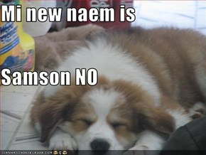 Mi new naem is Samson NO