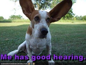 Me has good hearing.