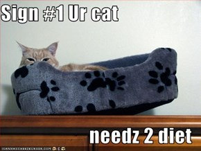 Sign #1 Ur cat   needz 2 diet