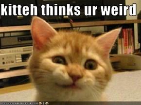 kitteh thinks ur weird