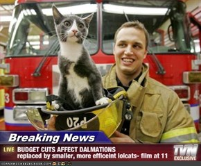 Breaking News - BUDGET CUTS AFFECT DALMATIONS replaced by smaller, more efficeint lolcats- film at 11