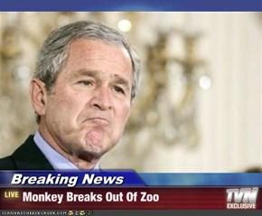 Breaking News - Monkey Breaks Out Of Zoo