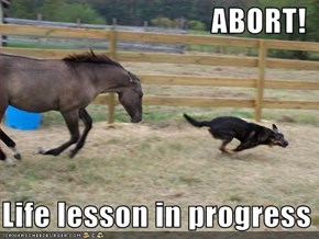 ABORT!    Life lesson in progress