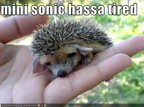 mini sonic hassa tired