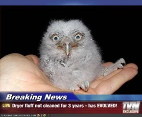 Breaking News - Dryer fluff not cleaned for 3 years - has EVOLVED!