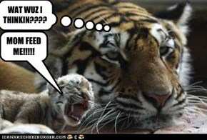 MOM FEED ME!!!!!