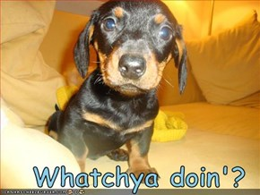 Whatchya doin'?