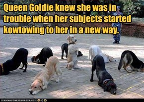 Queen Goldie knew she was in trouble when her subjects started kowtowing to her in a new way.