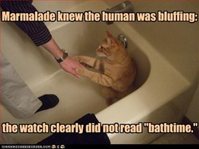 Marmalade knew the human was bluffing:
