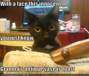 With a face this innocent you just know Granma's antique vase is toast