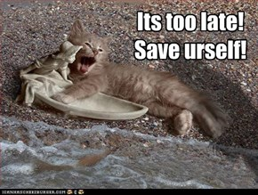 Kitteh overboard!