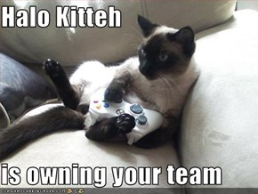 Halo Kitteh  is owning your team