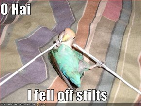 O Hai  I fell off stilts