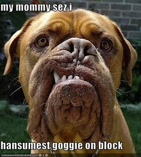 my mommy sez i  hansumest goggie on block