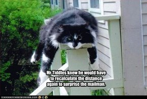 Mr Tiddles knew he would have to recalculate the distance again to surprise the mailman.
