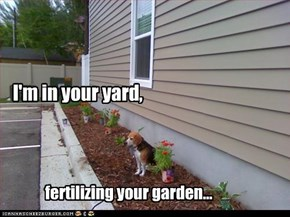 I'm in your yard,