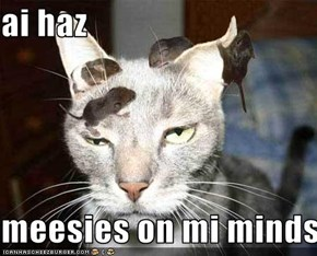 ai haz  meesies on mi minds