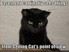Basement Cat finally sees things  from Ceiling Cat's point of view