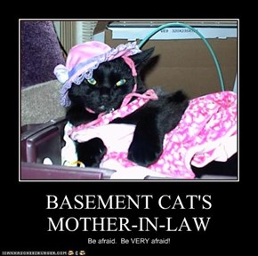 BASEMENT CAT'S MOTHER-IN-LAW