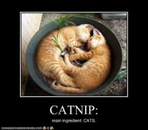 CATNIP: