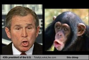 43th president of the U.S. Totally Looks Like this chimp