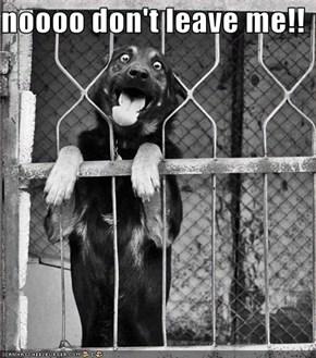 noooo don't leave me!!