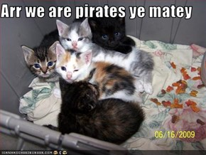 Arr we are pirates ye matey