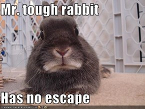 Mr. tough rabbit  Has no escape
