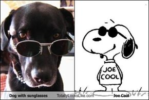 Dog with sunglasses Totally Looks Like Joe Cool