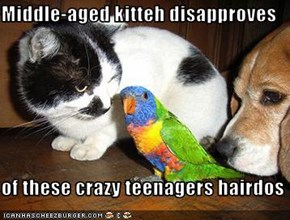 Middle-aged kitteh disapproves  of these crazy teenagers hairdos