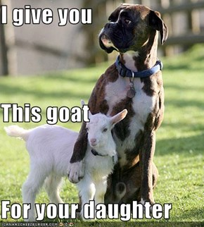 I give you This goat For your daughter