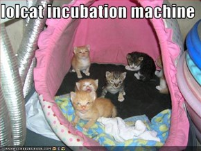 lolcat incubation machine
