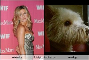 celebrity  Totally Looks Like my dog