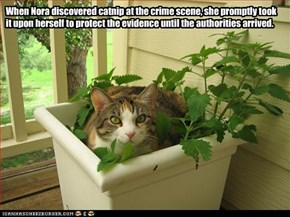 When Nora discovered catnip at the crime scene, she promptly took it upon herself to protect the evidence until the authorities arrived.