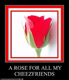 A ROSE FOR ALL MY CHEEZFRIENDS