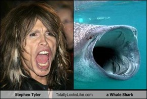 Stephen Tyler Totally Looks Like a Whale Shark