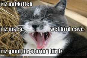 i iz not kitteh i iz just a                        wet bird cave i iz good for storing birdz
