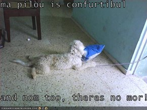 ma pilou is confurtibul  and nom too, theres no mor!!