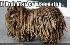 If Bob Marley was a dog...
