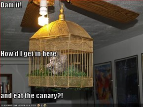 Dam it! How'd I get in here and eat the canary?!