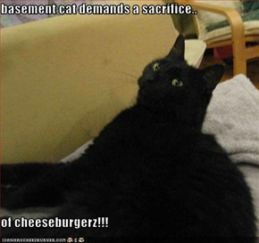 basement cat demands a sacrifice..  of cheeseburgerz!!!
