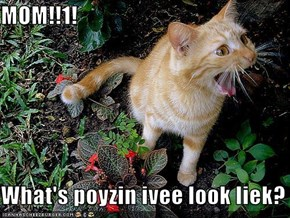 MOM!!1!  What's poyzin ivee look liek?