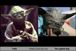 Yoda Totally Looks Like The ugliest dog