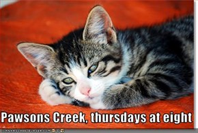 Pawsons Creek, thursdays at eight