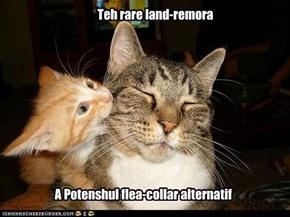Teh rare land-remora