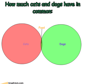 How much cats and dogs have in common: