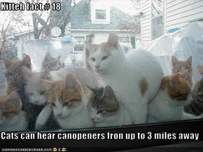 Kitteh fact # 18  Cats can hear canopeners fron up to 3 miles away