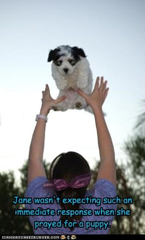 Jane wasn't expecting such an immediate response when she prayed for a puppy.