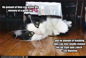 No amount of time can erase the memory of a good cat,